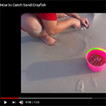 How to Catch Sand Crayfish